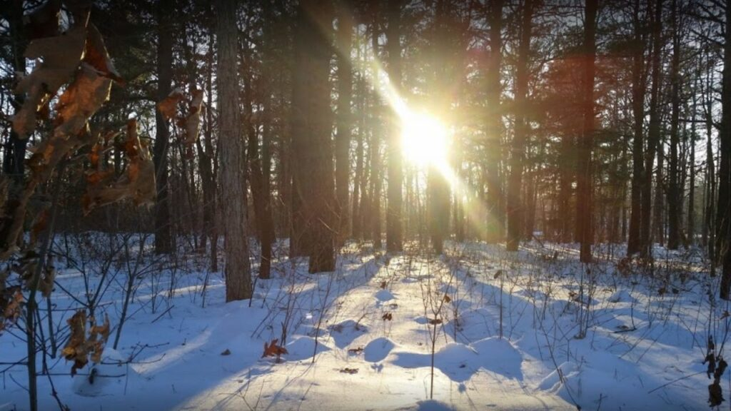 Pine Bush Preserves Albany - Free things to do in Albany